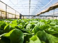 Commercial Seedlings
